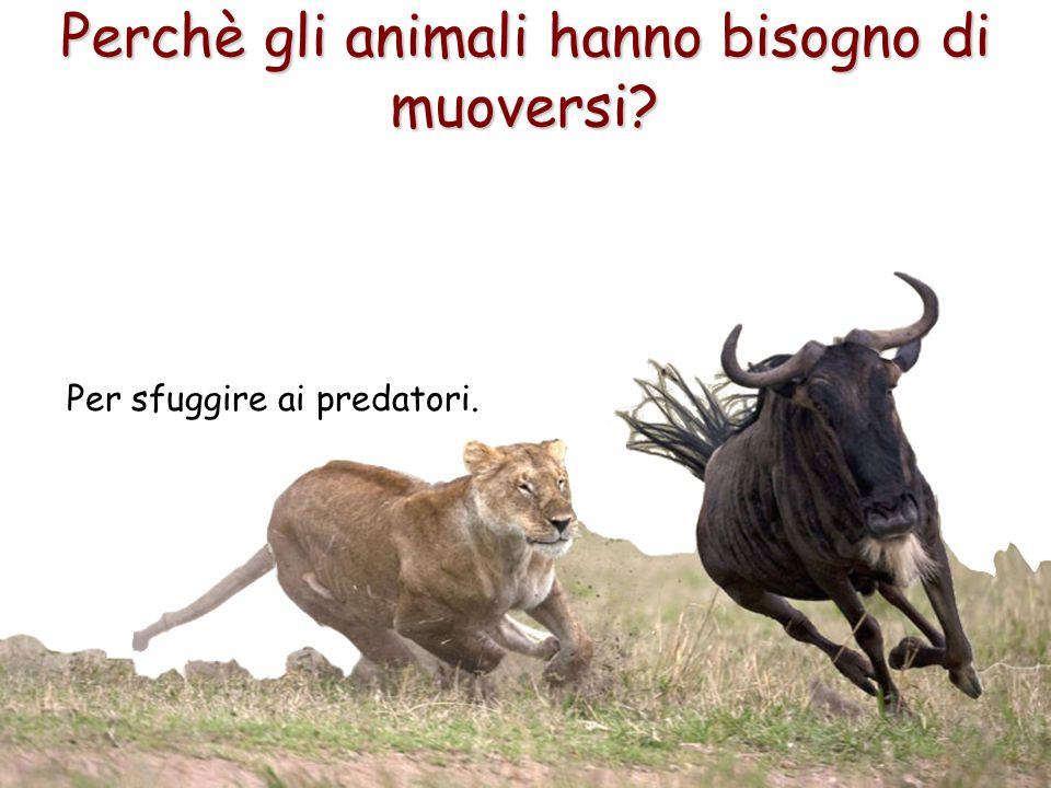 10 Perchè gli animali hanno bisogno di muoversi? Per sfuggire ai predatori.