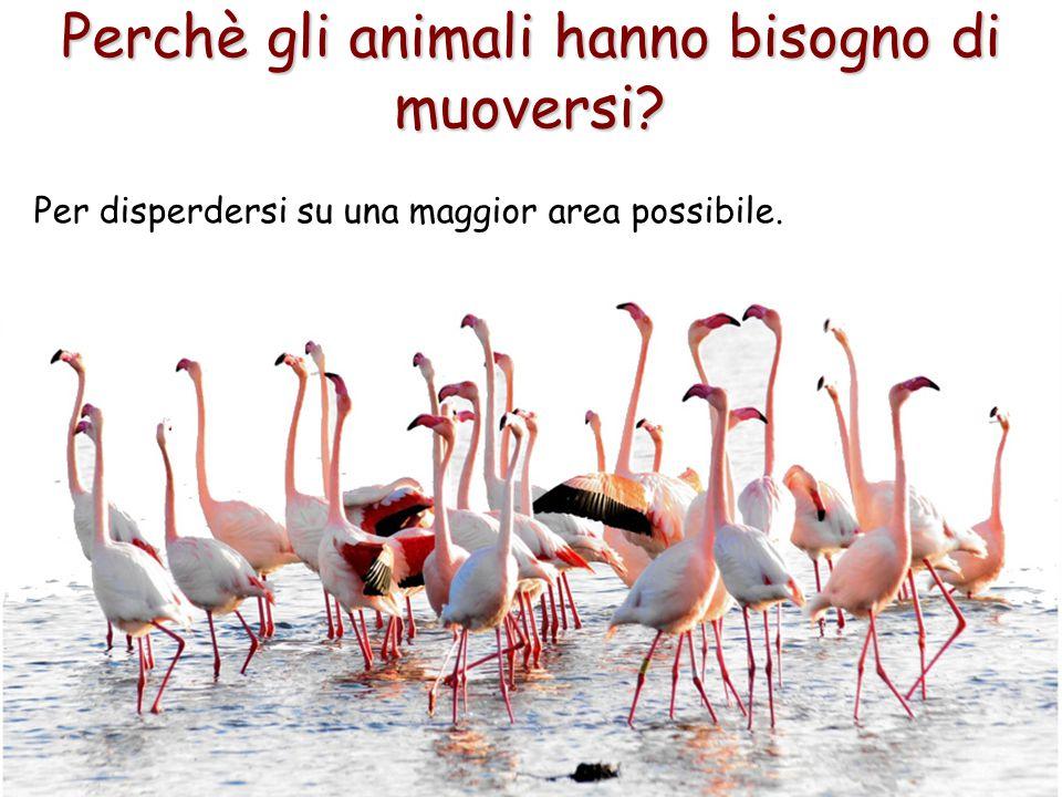 11 Perchè gli animali hanno bisogno di muoversi? Per disperdersi su una maggior area possibile.