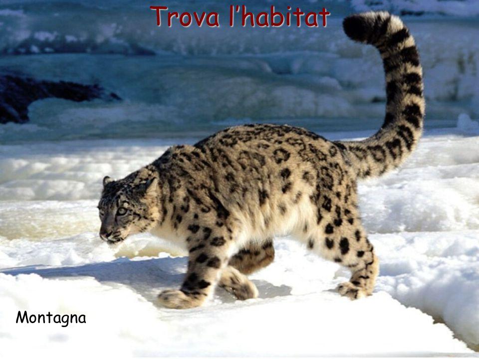 14 Trova l'habitat Montagna