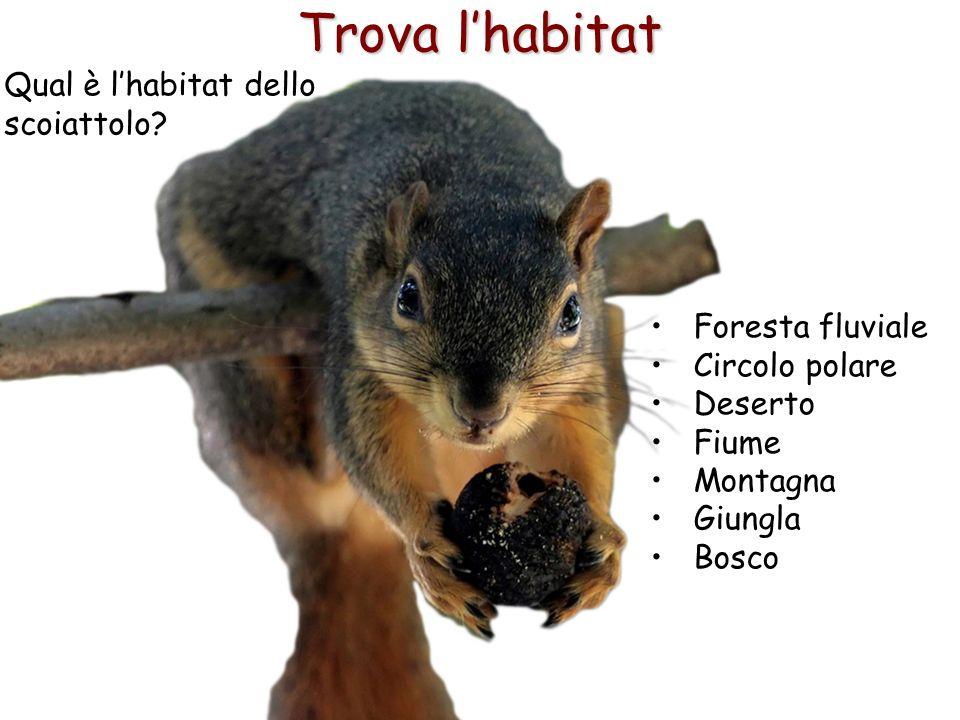 22 Trova l'habitat Qual è l'habitat dello scoiattolo? Foresta fluviale Circolo polare Deserto Fiume Montagna Giungla Bosco