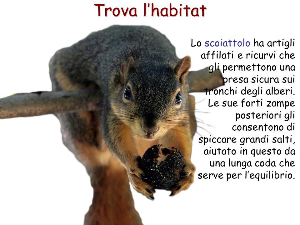 24 Trova l'habitat Lo scoiattolo ha artigli affilati e ricurvi che gli permettono una presa sicura sui tronchi degli alberi. Le sue forti zampe poster