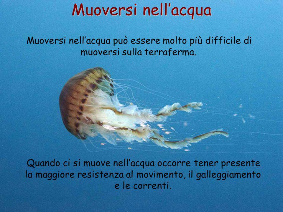 46 Muoversi nell'acqua Muoversi nell'acqua può essere molto più difficile di muoversi sulla terraferma. Quando ci si muove nell'acqua occorre tener pr