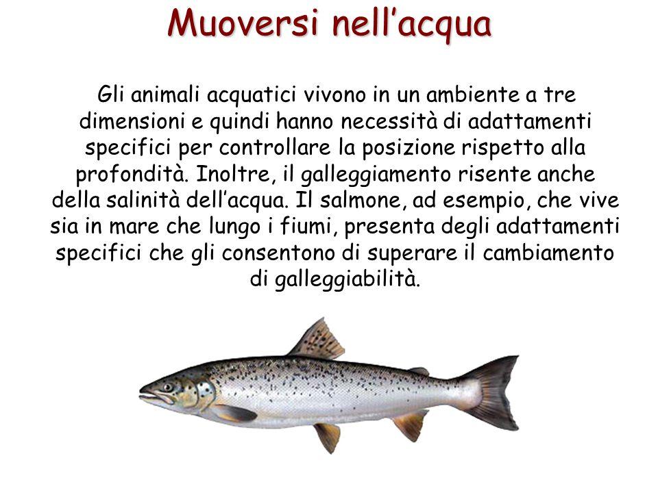 48 Muoversi nell'acqua Gli animali acquatici vivono in un ambiente a tre dimensioni e quindi hanno necessità di adattamenti specifici per controllare