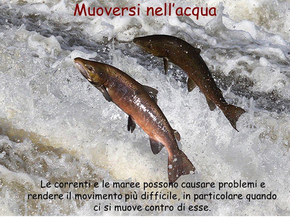 49 Muoversi nell'acqua Le correnti e le maree possono causare problemi e rendere il movimento più difficile, in particolare quando ci si muove contro