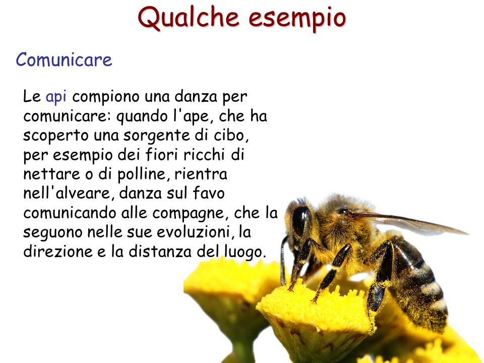5 Qualche esempio Comunicare Le api compiono una danza per comunicare: quando l'ape, che ha scoperto una sorgente di cibo, per esempio dei fiori ricch