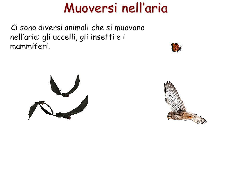 55 Muoversi nell'aria Ci sono diversi animali che si muovono nell'aria: gli uccelli, gli insetti e i mammiferi.