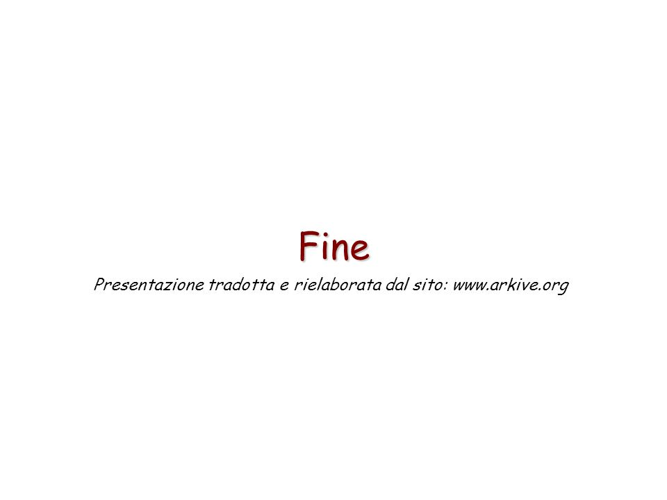 64 Fine Presentazione tradotta e rielaborata dal sito: www.arkive.org