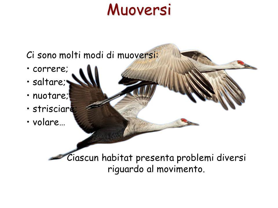 7Muoversi Ci sono molti modi di muoversi: correre; saltare; nuotare; strisciare; volare… Ciascun habitat presenta problemi diversi riguardo al movimen