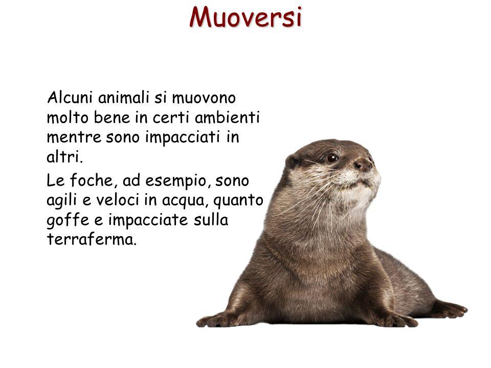 8Muoversi Alcuni animali si muovono molto bene in certi ambienti mentre sono impacciati in altri. Le foche, ad esempio, sono agili e veloci in acqua,