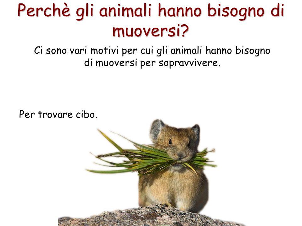 9 Perchè gli animali hanno bisogno di muoversi? Per trovare cibo. Ci sono vari motivi per cui gli animali hanno bisogno di muoversi per sopravvivere.