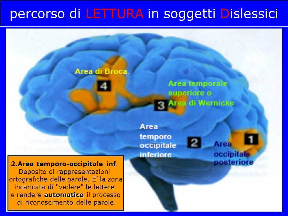 percorso di LETTURA in soggetti Dislessici 2.Area temporo-occipitale inf. Deposito di rappresentazioni ortografiche delle parole. E' la zona incaricat