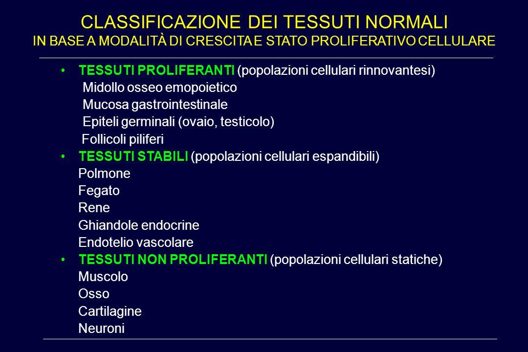 CLASSIFICAZIONE DEI TESSUTI NORMALI IN BASE A MODALITÀ DI CRESCITA E STATO PROLIFERATIVO CELLULARE TESSUTI PROLIFERANTI (popolazioni cellulari rinnova