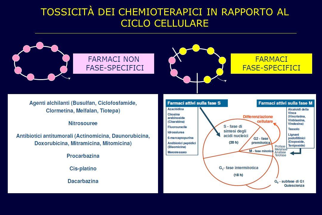 TOSSICITÀ DEI CHEMIOTERAPICI IN RAPPORTO AL CICLO CELLULARE FARMACI NON FASE-SPECIFICI FARMACI FASE-SPECIFICI