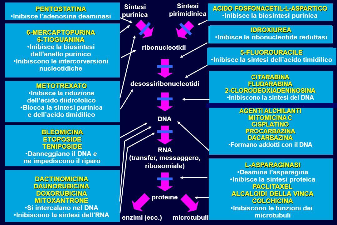 ACIDO FOSFONACETIL-L-ASPARTICO Inibisce la biosintesi purinica 5-FLUOROURACILE Inibisce la sintesi dell'acido timidilico PENTOSTATINA Inibisce l'adeno