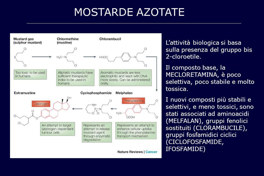 MOSTARDE AZOTATE L'attività biologica si basa sulla presenza del gruppo bis 2-cloroetile. Il composto base, la MECLORETAMINA, è poco selettiva, poco s