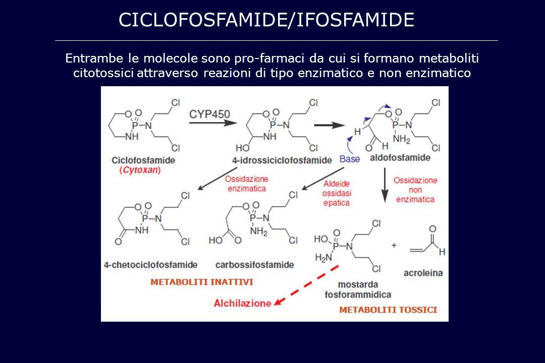 CICLOFOSFAMIDE/IFOSFAMIDE Entrambe le molecole sono pro-farmaci da cui si formano metaboliti citotossici attraverso reazioni di tipo enzimatico e non