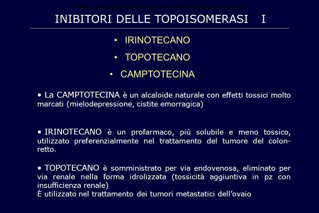 Inibitori della Topoisomerasi II (a sinistra) e della Topoisomerasi I (a destra) INIBITORI DELLE TOPOISOMERASI I IRINOTECANO TOPOTECANO CAMPTOTECINA L