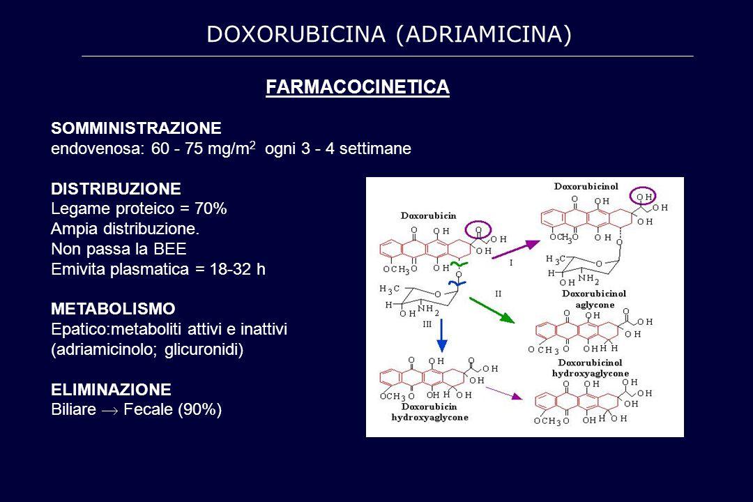 FARMACOCINETICA SOMMINISTRAZIONE endovenosa: 60 - 75 mg/m 2 ogni 3 - 4 settimane DISTRIBUZIONE Legame proteico = 70% Ampia distribuzione. Non passa la
