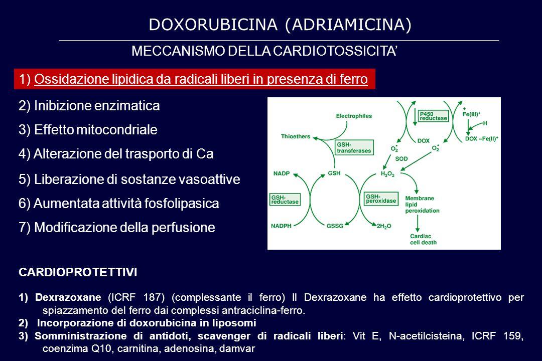 2) Inibizione enzimatica 3) Effetto mitocondriale 4) Alterazione del trasporto di Ca MECCANISMO DELLA CARDIOTOSSICITA' 1) Ossidazione lipidica da radi