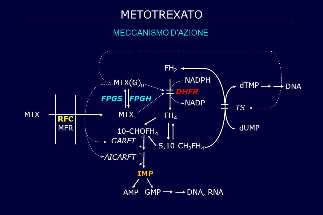 MTX FPGS FPGH MTX(G) n FH 4 5,10-CH 2 FH 4 10-CHOFH 4 GARFT AICARFT IMP DHFR FH 2 dTMP dUMP TS MFR MTX RFC NADPH NADP DNA, RNA AMP GMP DNA METOTREXATO