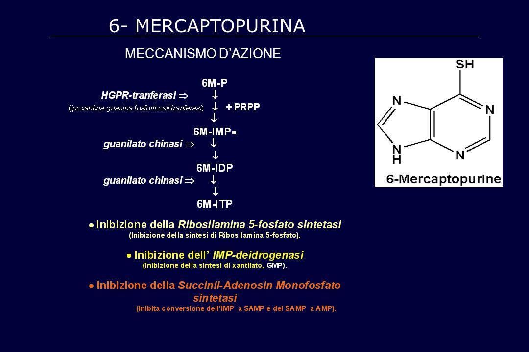 6- MERCAPTOPURINA MECCANISMO D'AZIONE