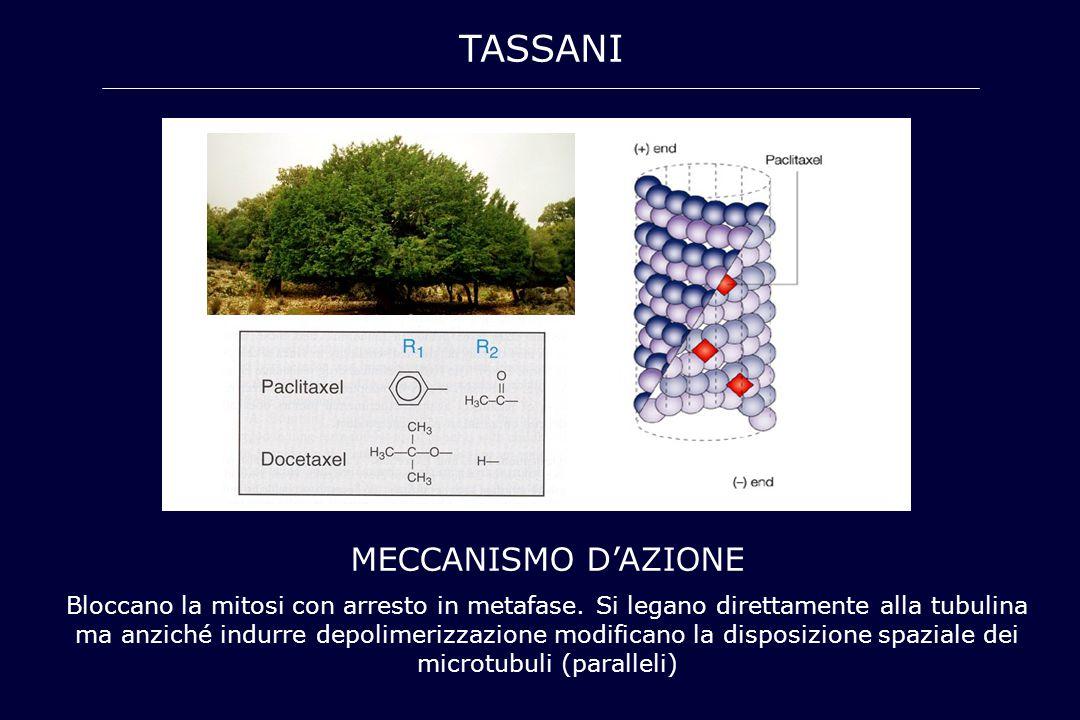 TASSANI MECCANISMO D'AZIONE Bloccano la mitosi con arresto in metafase. Si legano direttamente alla tubulina ma anziché indurre depolimerizzazione mod