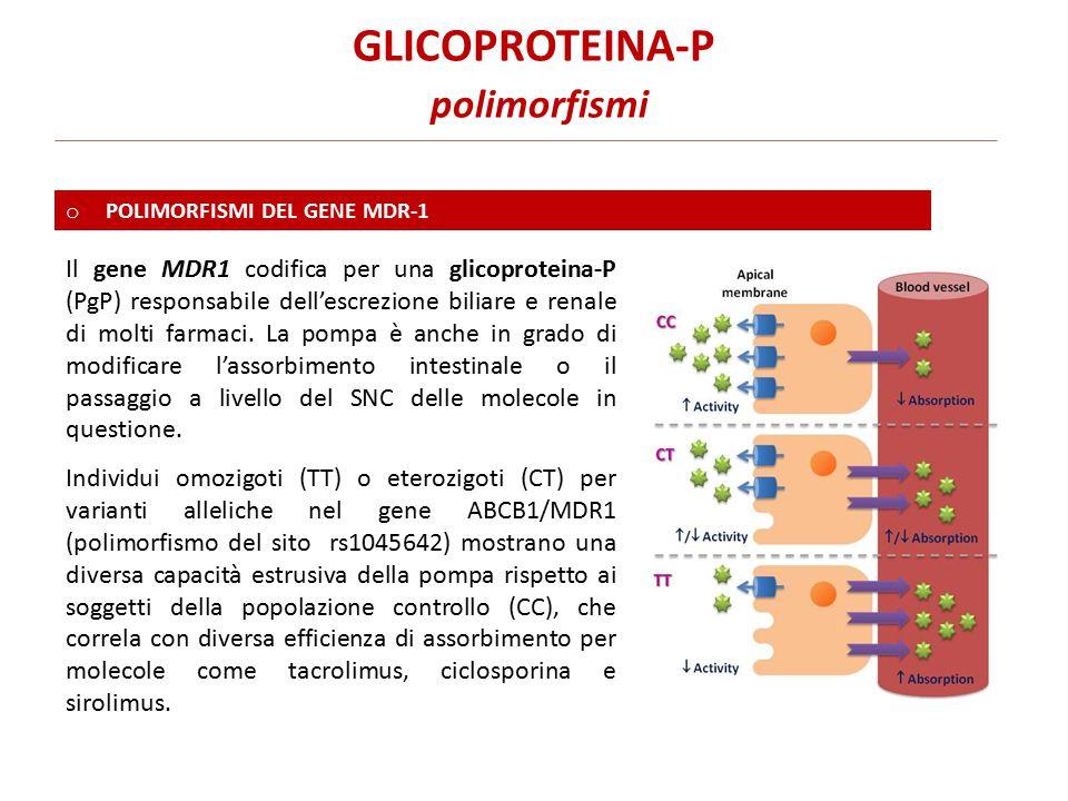 Individui omozigoti (TT) o eterozigoti (CT) per varianti alleliche nel gene ABCB1/MDR1 (polimorfismo del sito rs1045642) mostrano una diversa capacità estrusiva della pompa rispetto ai soggetti della popolazione controllo (CC), che correla con diversa efficienza di assorbimento per molecole come tacrolimus, ciclosporina e sirolimus.