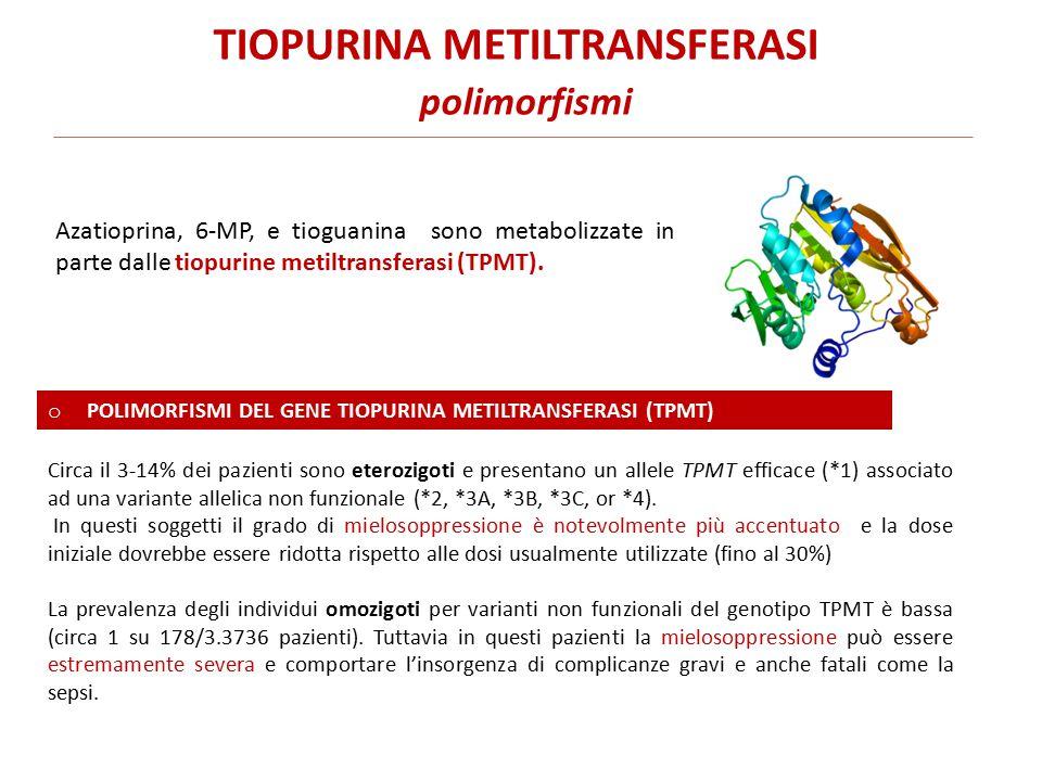 Azatioprina, 6-MP, e tioguanina sono metabolizzate in parte dalle tiopurine metiltransferasi (TPMT).