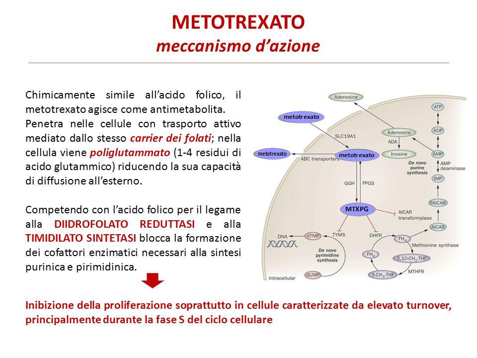 METOTREXATO meccanismo d'azione Chimicamente simile all'acido folico, il metotrexato agisce come antimetabolita.