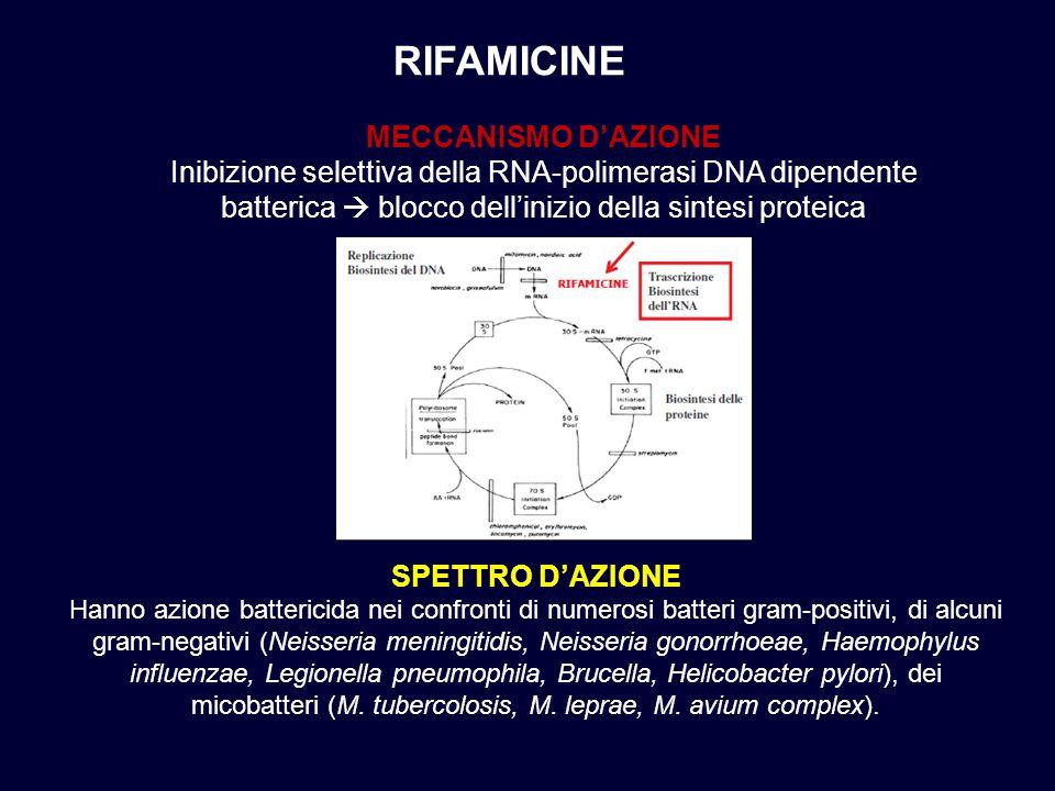 RIFAMICINE MECCANISMO D'AZIONE Inibizione selettiva della RNA-polimerasi DNA dipendente batterica  blocco dell'inizio della sintesi proteica SPETTRO