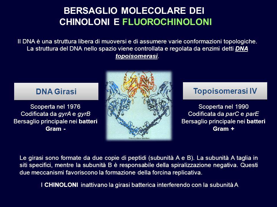 BERSAGLIO MOLECOLARE DEI CHINOLONI E FLUOROCHINOLONI DNA Girasi Topoisomerasi IV Scoperta nel 1976 Codificata da gyrA e gyrB Bersaglio principale nei