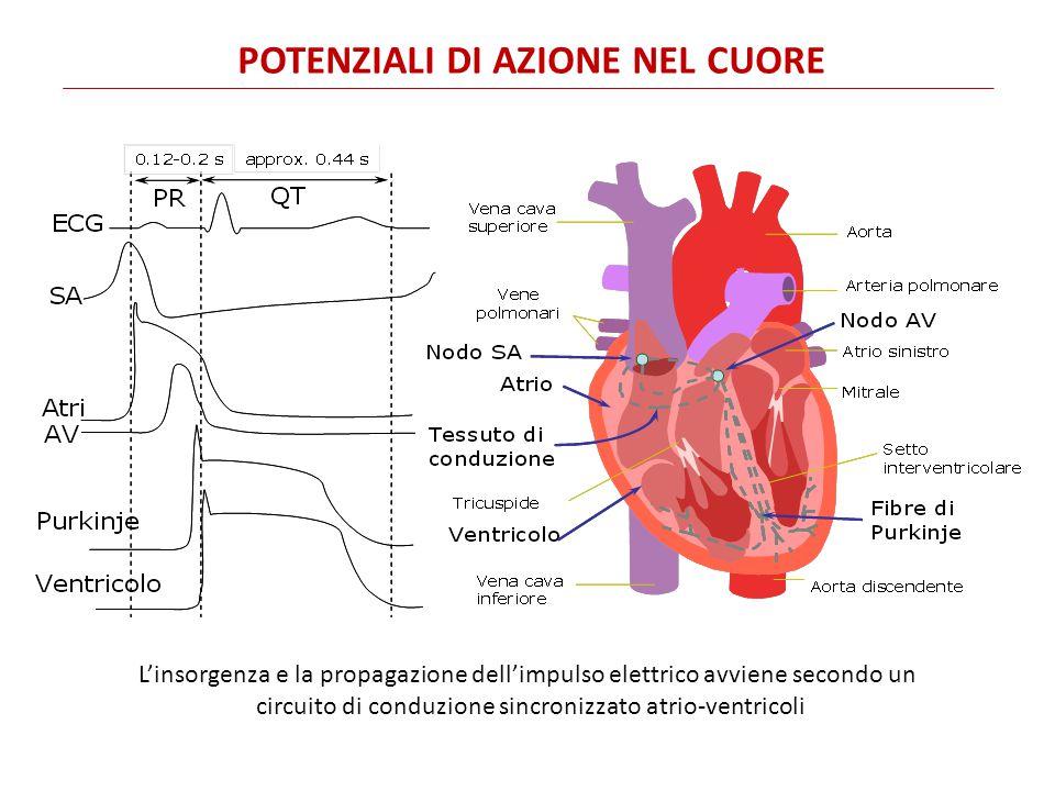 INSORGENZA E PROPAGAZIONE DELL'IMPULSO ELETTRICO L'attività elettrica del cuore che si verifica nel ciclo cardiaco è registrata in superficie nel tracciato elettrocardiografico.