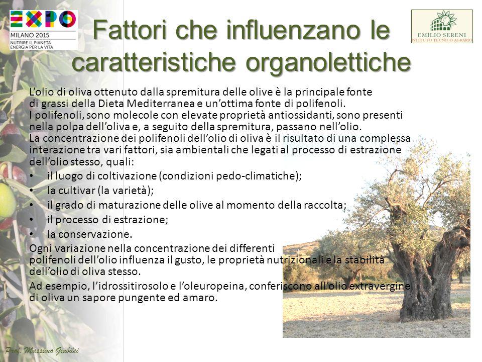 L'olio di oliva ottenuto dalla spremitura delle olive è la principale fonte di grassi della Dieta Mediterranea e un'ottima fonte di polifenoli. I poli