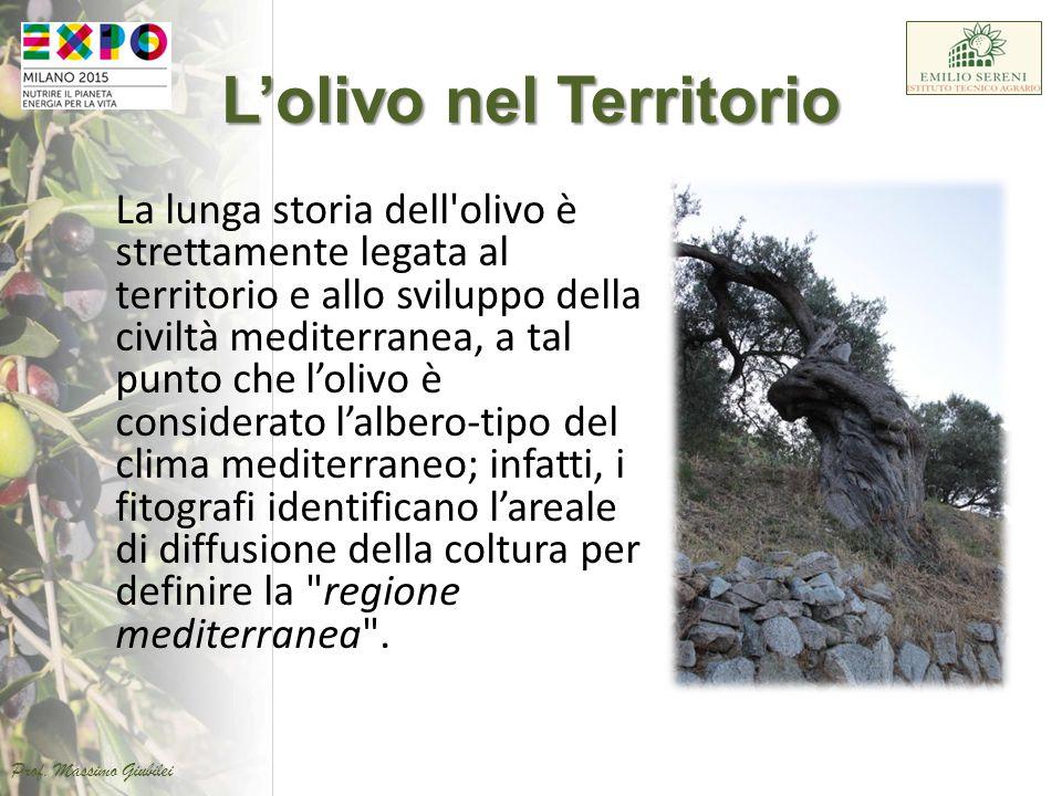 L'olivo nel Territorio La lunga storia dell'olivo è strettamente legata al territorio e allo sviluppo della civiltà mediterranea, a tal punto che l'ol