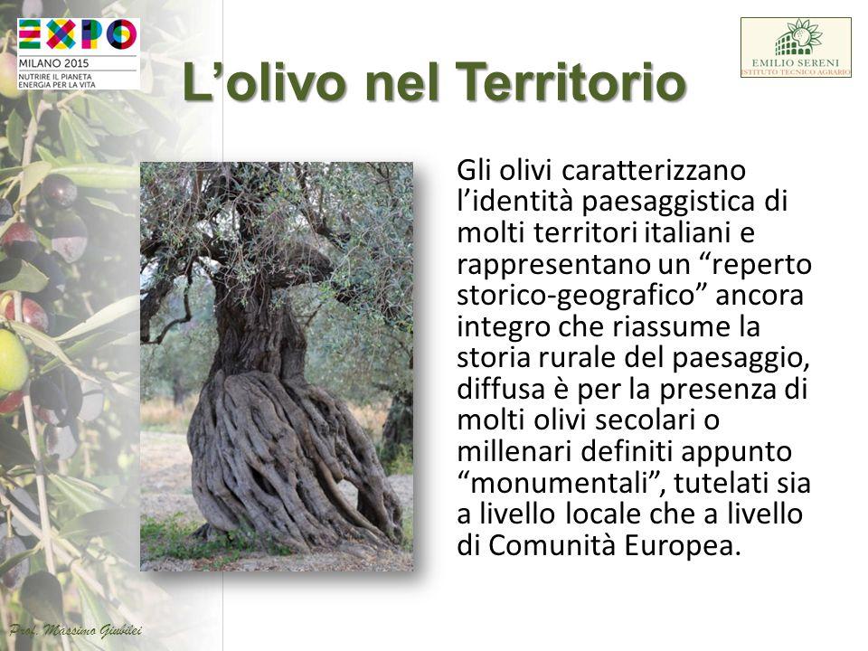 """L'olivo nel Territorio Gli olivi caratterizzano l'identità paesaggistica di molti territori italiani e rappresentano un """"reperto storico-geografico"""" a"""