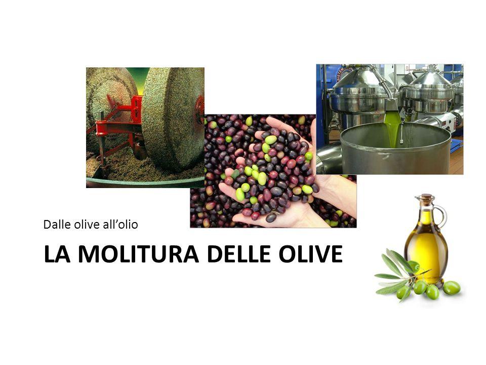 LA MOLITURA DELLE OLIVE Dalle olive all'olio