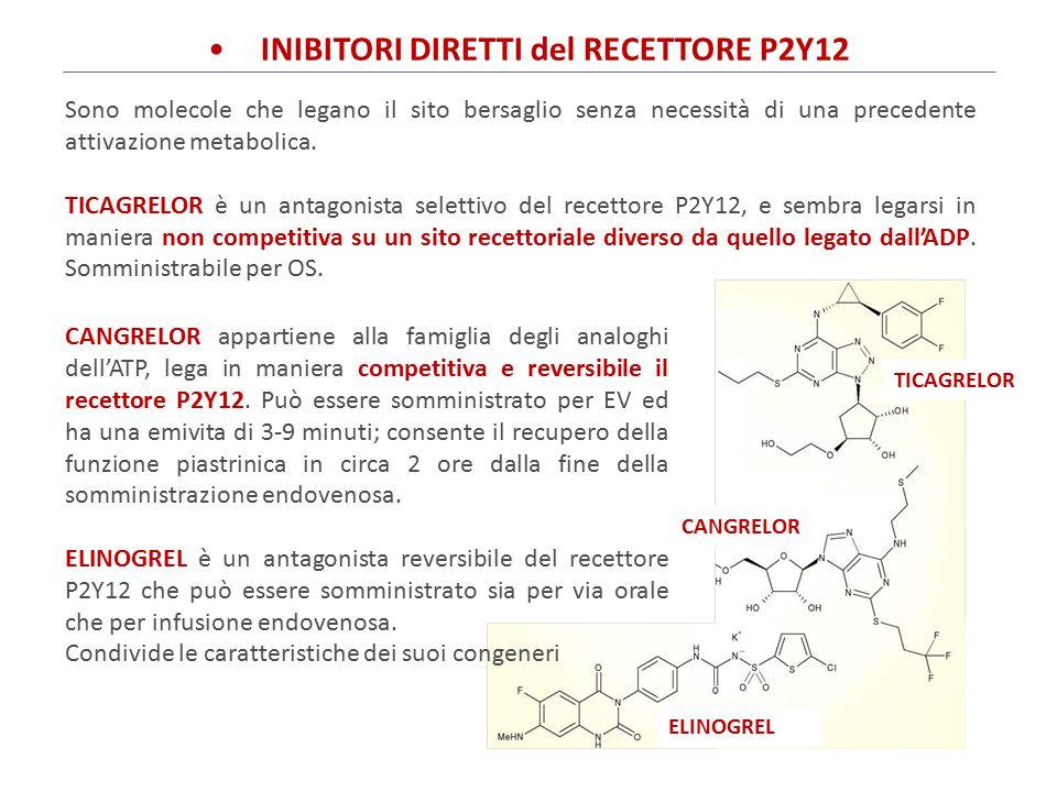 INIBITORI DIRETTI DELLA TROMBINA IRUDINA Il prototipo delle molecole in grado di inibire la conversione della protrombina in trombina attivata è rappresentato dalla IRUDINA, prodotta dalle ghiandole salivari di una sanguisuga (Hirudo medicinalis).