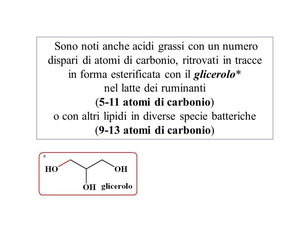 Sono noti anche acidi grassi con un numero dispari di atomi di carbonio, ritrovati in tracce in forma esterificata con il glicerolo* nel latte dei rum