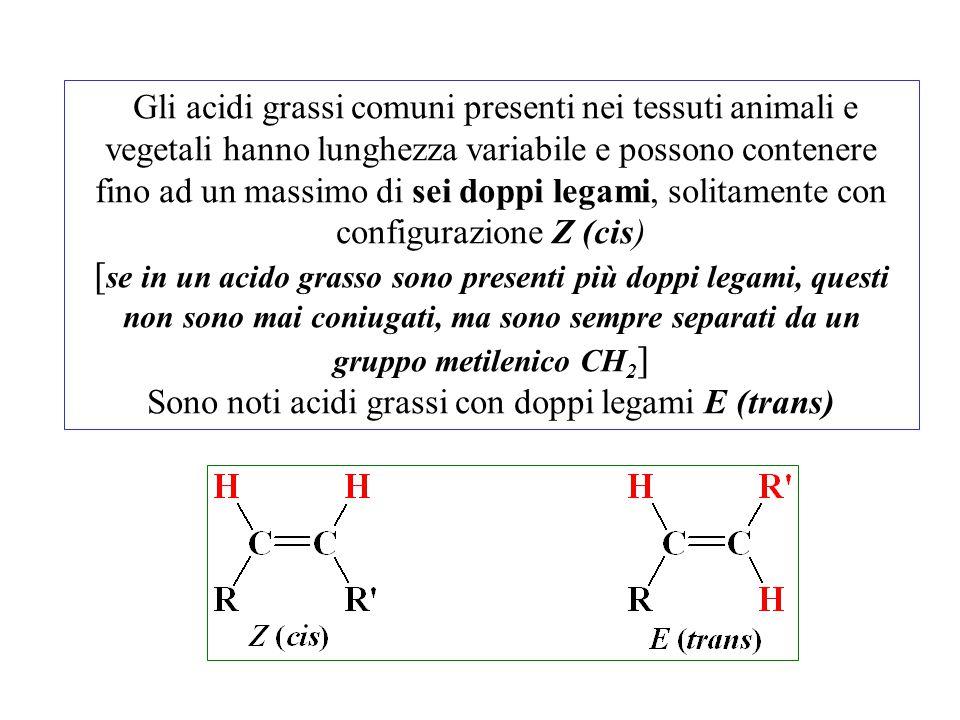 Gli acidi grassi comuni presenti nei tessuti animali e vegetali hanno lunghezza variabile e possono contenere fino ad un massimo di sei doppi legami,
