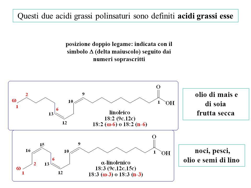 Questi due acidi grassi polinsaturi sono definiti acidi grassi esse noci, pesci, olio e semi di lino olio di mais e di soia frutta secca posizione dop