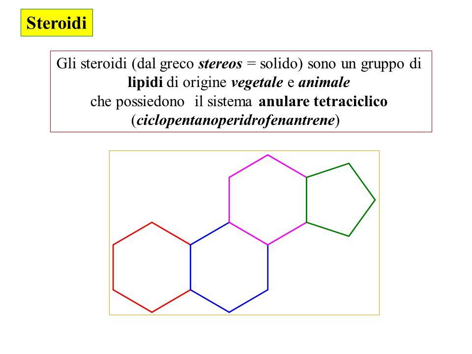 Steroidi Gli steroidi (dal greco stereos = solido) sono un gruppo di lipidi di origine vegetale e animale che possiedono il sistema anulare tetracicli