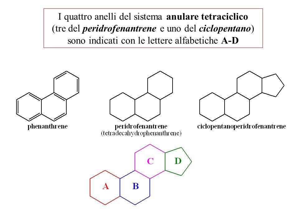 I quattro anelli del sistema anulare tetraciclico (tre del peridrofenantrene e uno del ciclopentano) sono indicati con le lettere alfabetiche A-D