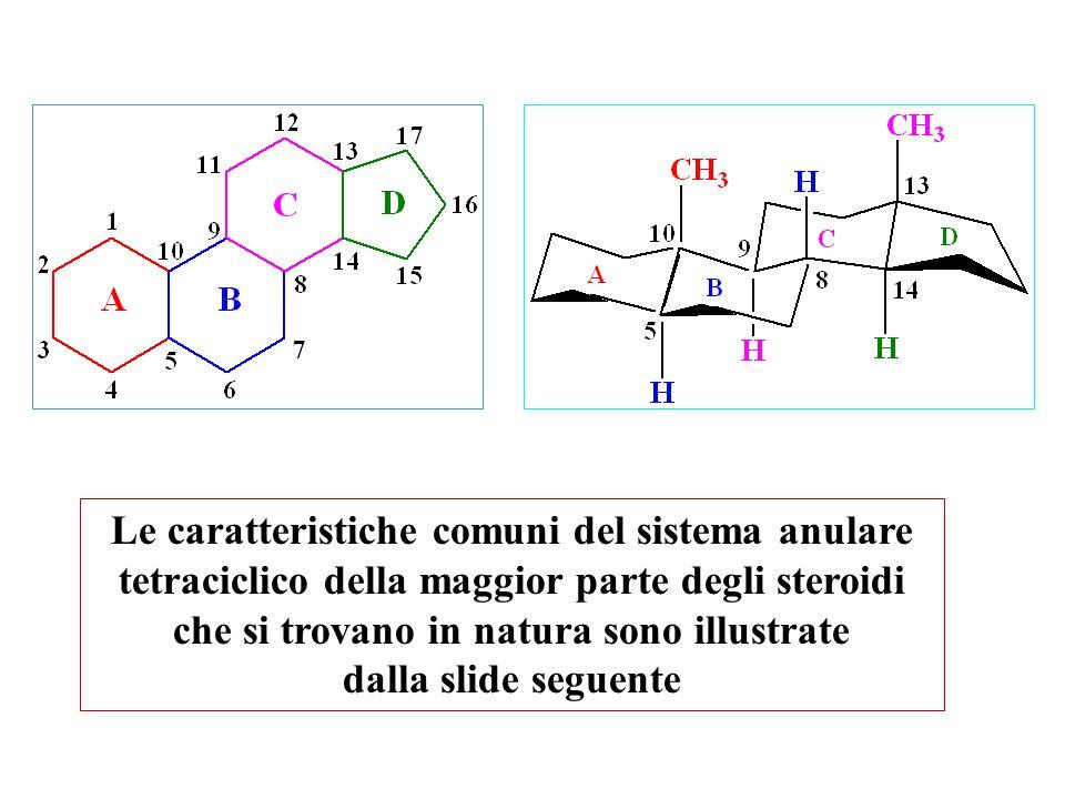 Le caratteristiche comuni del sistema anulare tetraciclico della maggior parte degli steroidi che si trovano in natura sono illustrate dalla slide seg