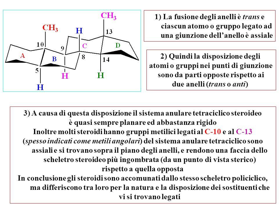 1) La fusione degli anelli è trans e ciascun atomo o gruppo legato ad una giunzione dell'anello è assiale 3) A causa di questa disposizione il sistema