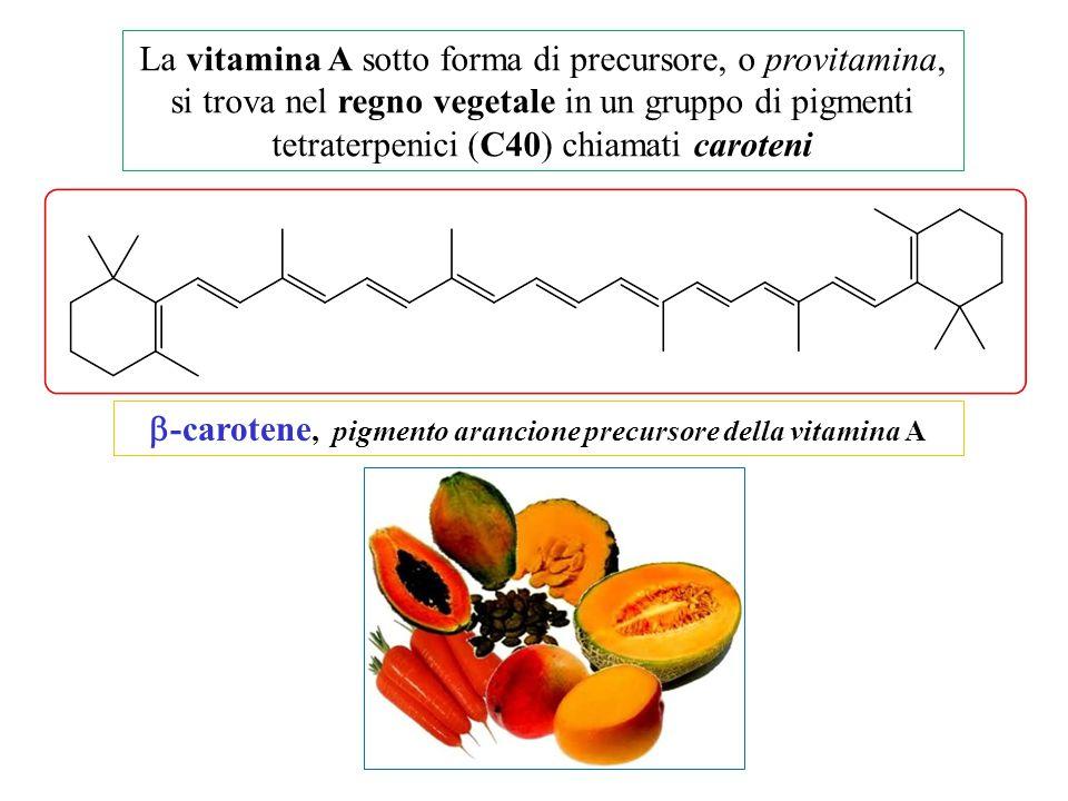 La vitamina A sotto forma di precursore, o provitamina, si trova nel regno vegetale in un gruppo di pigmenti tetraterpenici (C40) chiamati caroteni 