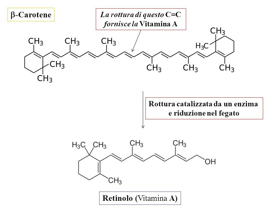  -Carotene Retinolo (Vitamina A) Rottura catalizzata da un enzima e riduzione nel fegato La rottura di questo C=C fornisce la Vitamina A