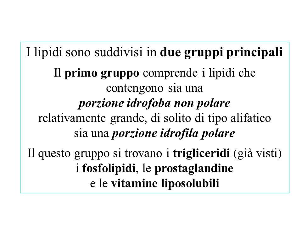 I lipidi sono suddivisi in due gruppi principali Il primo gruppo comprende i lipidi che contengono sia una porzione idrofoba non polare relativamente