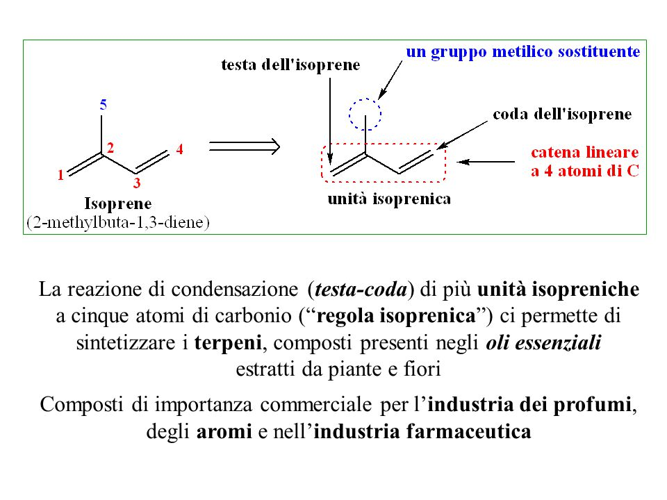 """La reazione di condensazione (testa-coda) di più unità isopreniche a cinque atomi di carbonio (""""regola isoprenica"""") ci permette di sintetizzare i terp"""