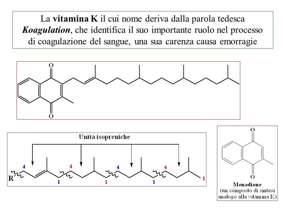 La vitamina K il cui nome deriva dalla parola tedesca Koagulation, che identifica il suo importante ruolo nel processo di coagulazione del sangue, una