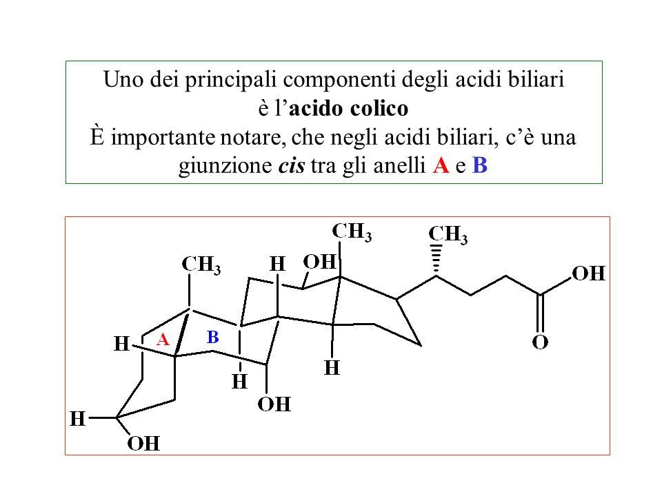 Uno dei principali componenti degli acidi biliari è l'acido colico È importante notare, che negli acidi biliari, c'è una giunzione cis tra gli anelli